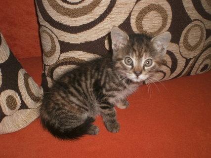 FOTKA - Mourek - koťátko 3