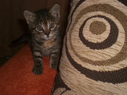 FOTKA - Mourek - koťátko 16