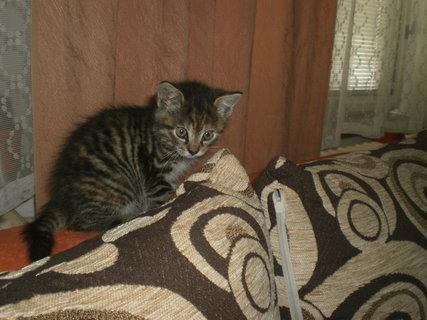 FOTKA - Mourek - koťátko 19