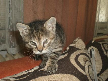 FOTKA - Mourek - koťátko 20