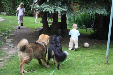 FOTKA - psice ho milují
