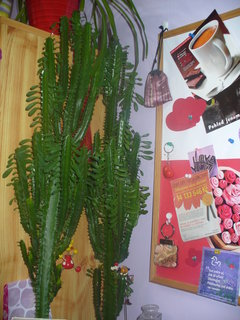 FOTKA - Kaktusy mi krásně rostou