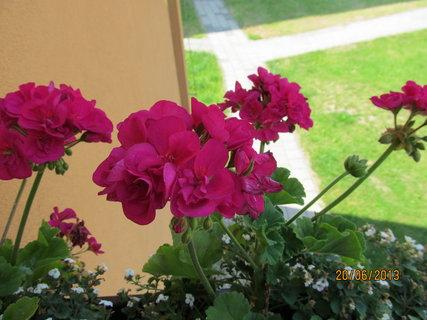 FOTKA - Pěkně kvetou