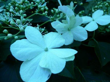 FOTKA - Kvetoucí keř 3
