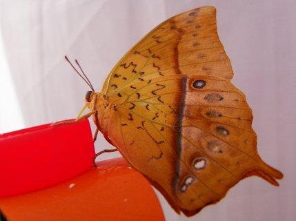 FOTKA - Ukázka křídel