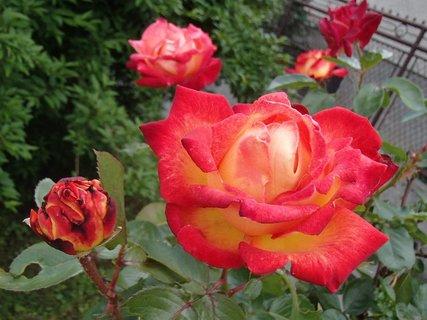 FOTKA - oranžovo červená