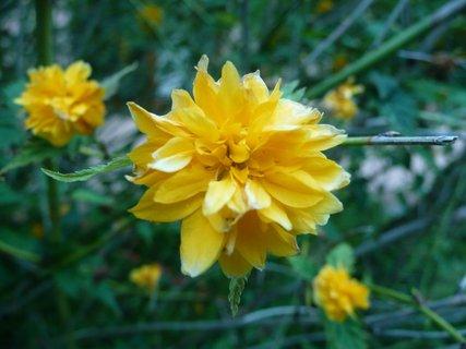 FOTKA - Žluté kvítky 8