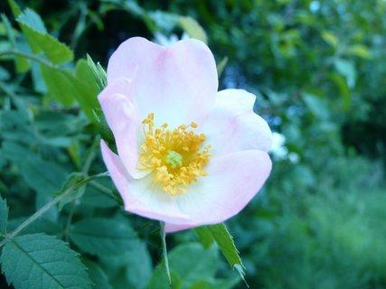 FOTKA - Kvetoucí keř 4