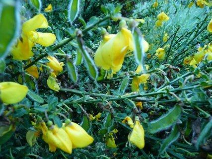 FOTKA - Žluté kvítky 9