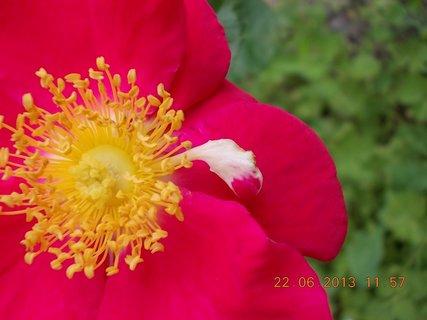FOTKA - 22.června - 8 - kouzlo barvy