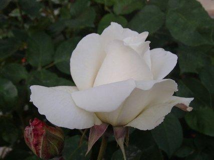 FOTKA - biela nežná