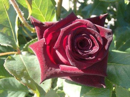 FOTKA - ružička na dnešný deň