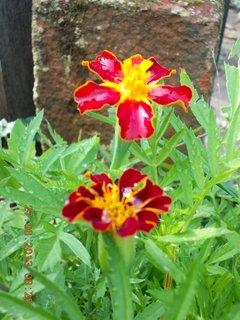FOTKA - 27. června - 21 - květ Afrikánu