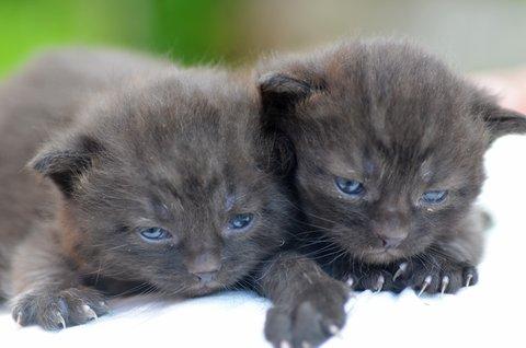 FOTKA - Novorozenci