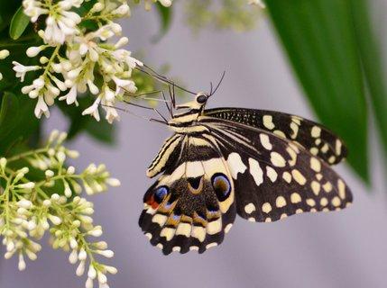 FOTKA - Ochutnávka sladkého nektaru