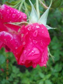 FOTKA - Neděle ráno po dešti - 3