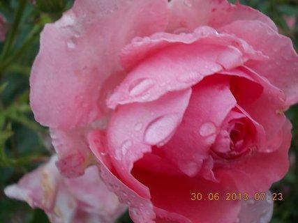 FOTKA - Neděle ráno po dešti - 5