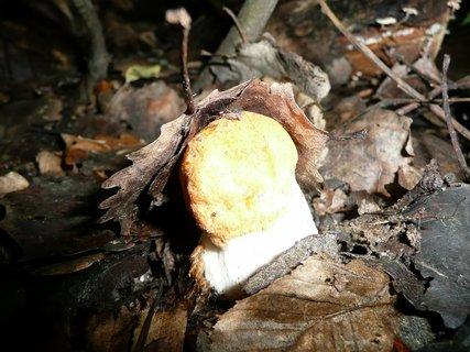 FOTKA - Houba v lese
