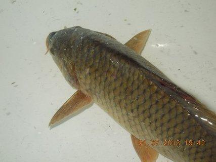 FOTKA - 27.6. - 2.7. - 21 - kapřík od kamaráda rybáře