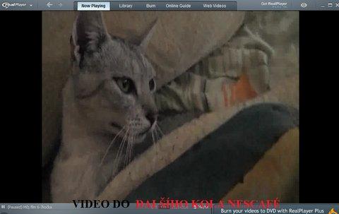 FOTKA - kočky2013videostream