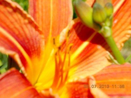 FOTKA - 2.července - 2 - krása Denivky