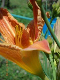 FOTKA - 2.července - 3 - krása Denivky