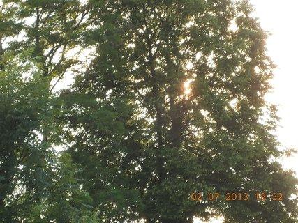 FOTKA - 2.července - 20 - letní nebe -sluníčko mezi stromy