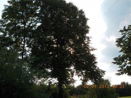 FOTKA - 2.července - 21 - letní nebe -sluníčko mezi stromy