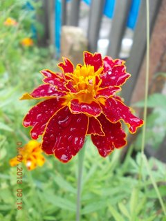 FOTKA - 4.července - 3 - samá kapička jsem od deště