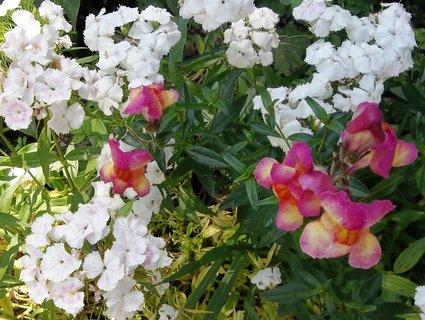FOTKA - kytička na zahradě.