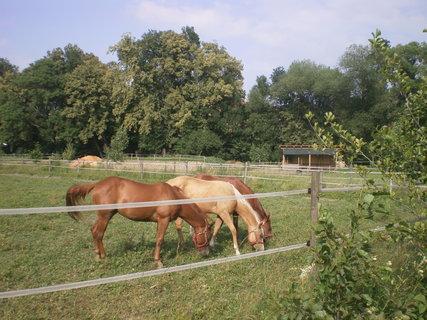 FOTKA - Koně ve výběhu 13