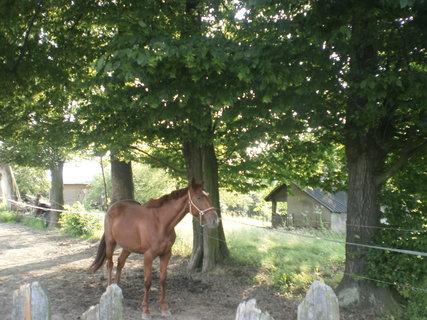 FOTKA - Kůň ve svém výběhu