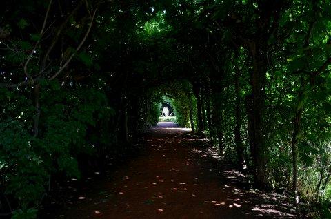 FOTKA -  rozložitý převislý buk Fagus sylvatica ´Pendula´, který svými větvemi vytváří nad cestičkou přírodní zelený tunel. Sazenice tohoto stromu a červenolistého buku byla údajně přivezena do Chrasti z Itálie.