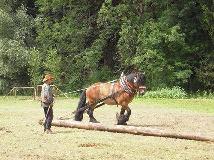 FOTKA - Řetůvka 2013-závody taž.koní