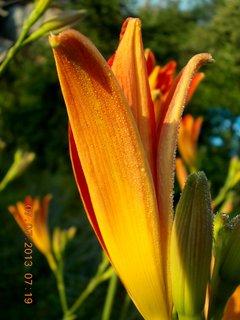 FOTKA - ranní rosa včera - 5