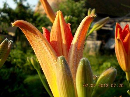 FOTKA - ranní rosa včera - 8