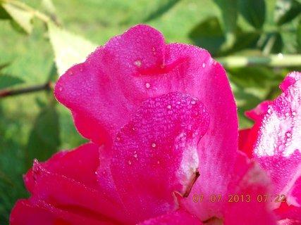 FOTKA - ranní rosa včera - 14