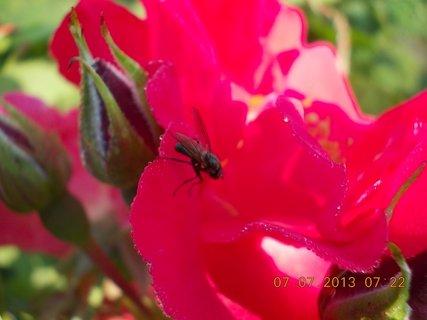 FOTKA - ranní rosa včera - 15