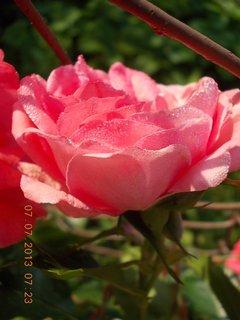 FOTKA - ranní rosa včera - 20