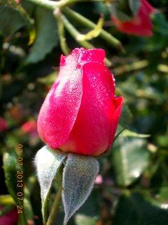 FOTKA - ranní rosa včera - 23