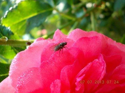 FOTKA - ranní rosa včera - 24