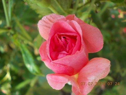 FOTKA - ranní rosa včera - 25