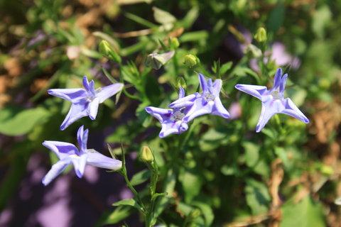 FOTKA - modrá v závěsu