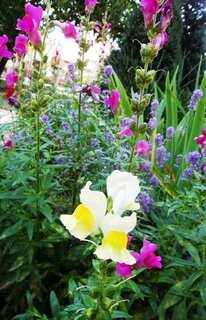 FOTKA - červenec-zahrada