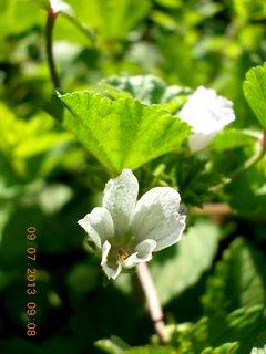 FOTKA - příroda je krásná - 7