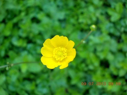 FOTKA - příroda je krásná - 9