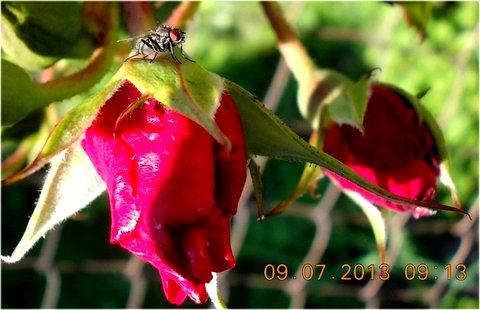 FOTKA - příroda je krásná - 20
