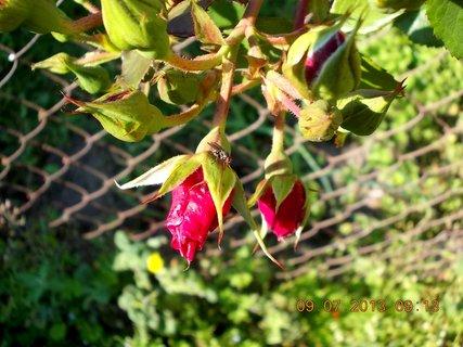 FOTKA - příroda je krásná - 21