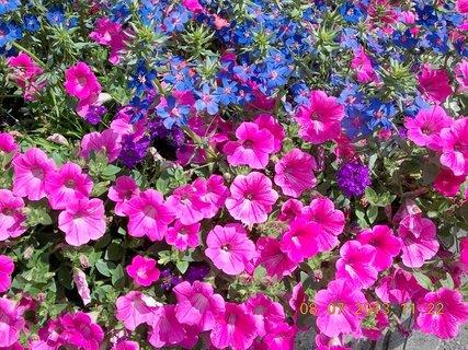 FOTKA - příroda je krásná - 23