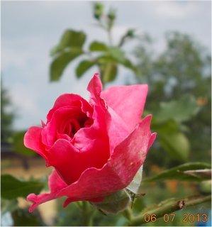 FOTKA - Léto - 9 - růžová krása